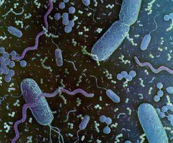 Selection of bacteria from the gut