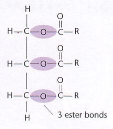 fettbildung chemie